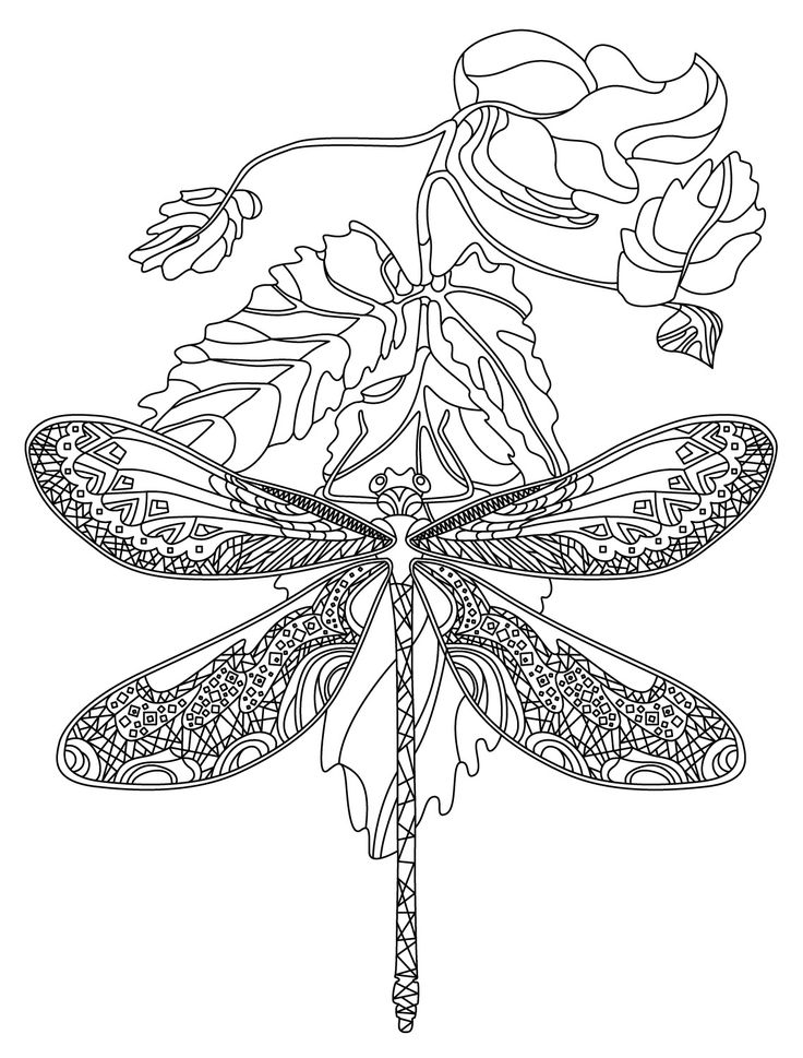 graphic relating to Dragonfly Printable named Dragonfly Printable Craft coloring.rocks!
