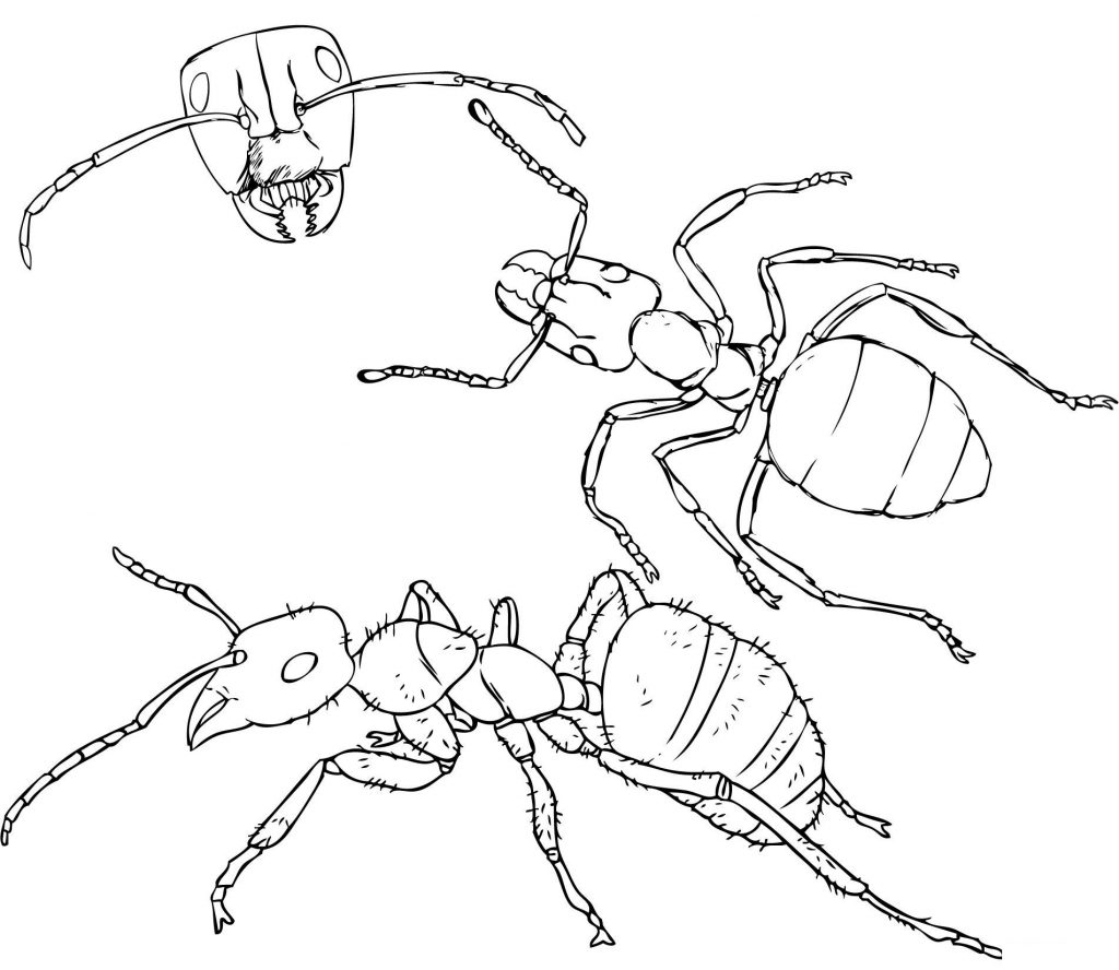 Angles of an Ant Coloring Page