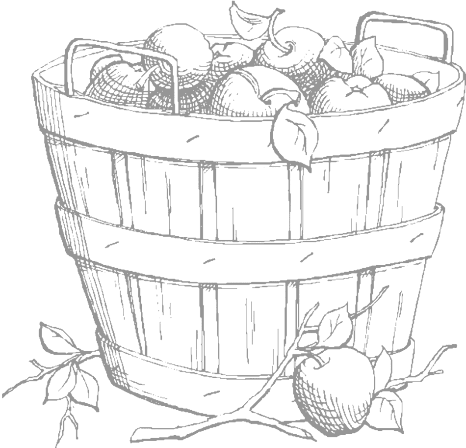 Apple Barrel Tracing Page for Adults