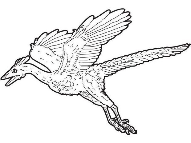 Archaeopteryx Dinosaur Coloring Page