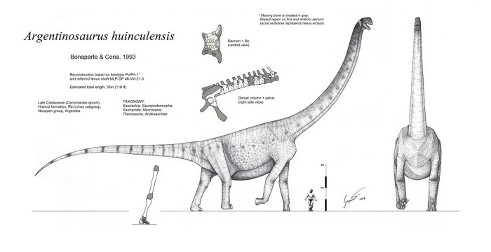 Argentinosaurus Info Sheet