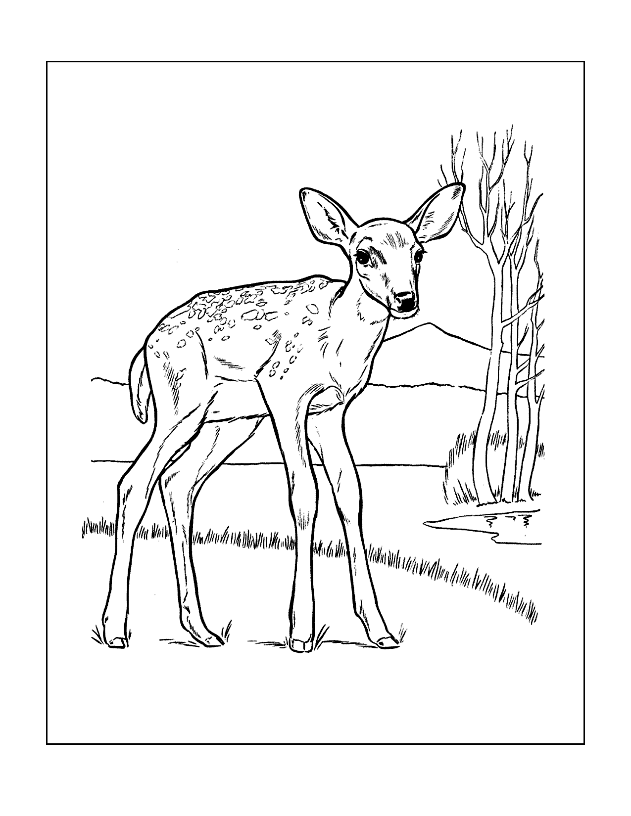 Baby Fawn Coloring Page