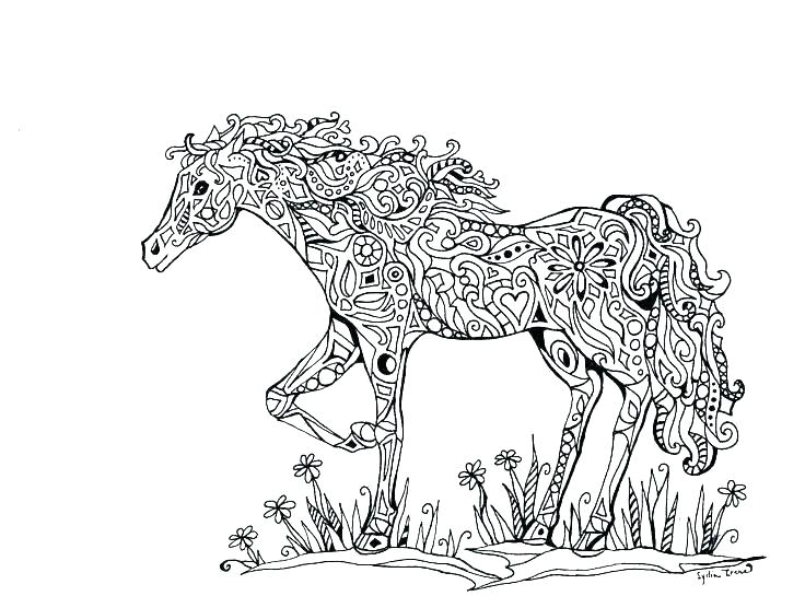 Beautiful Adult Horse Coloring Page