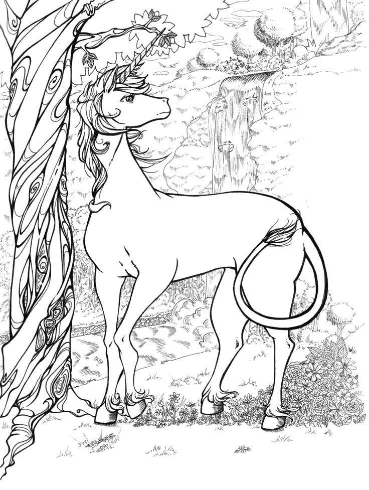 Beautiful Unicorn Coloring Pages for Adults