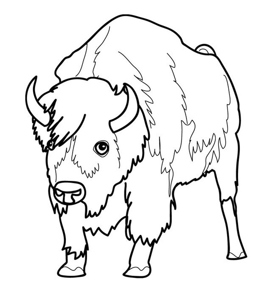 Animal Coloring Pages Coloring Rocks