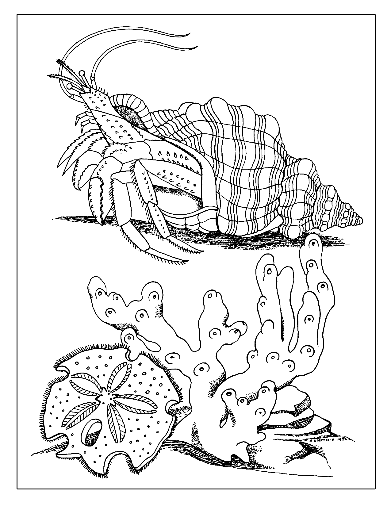 Crab In Its Shell Coloring Page