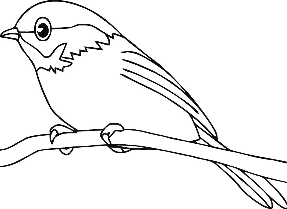 Cute Robin Easy Bird Coloring Page