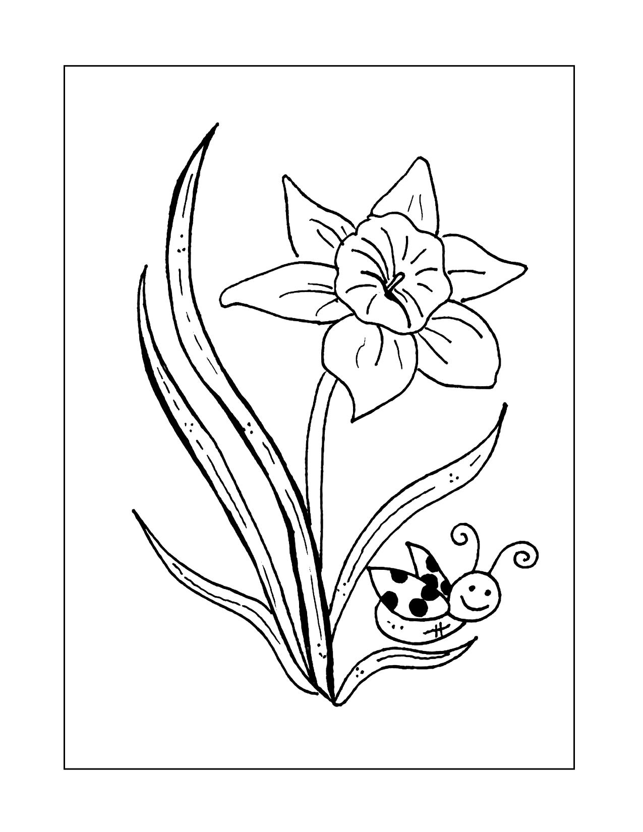 Daffodil And Ladybug Coloring Page