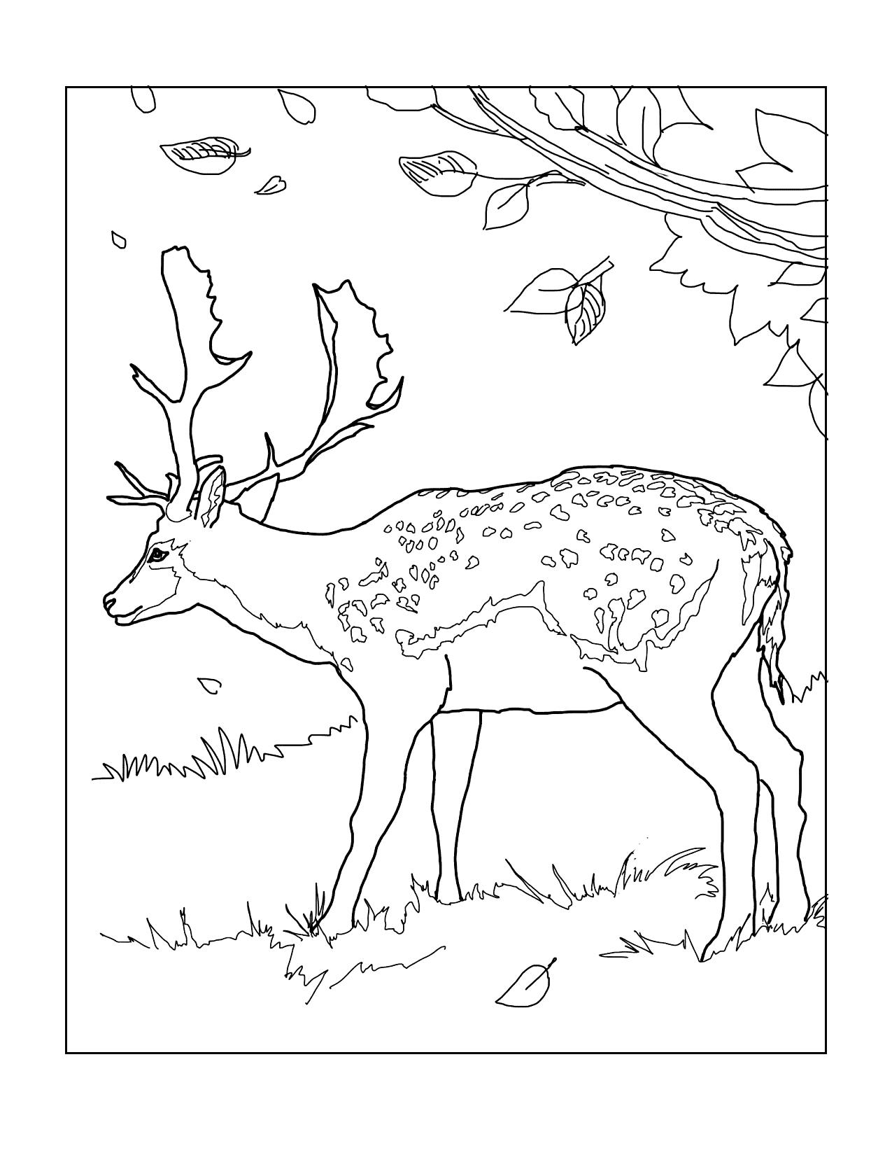 Deer In Falling Leaves Coloring Page