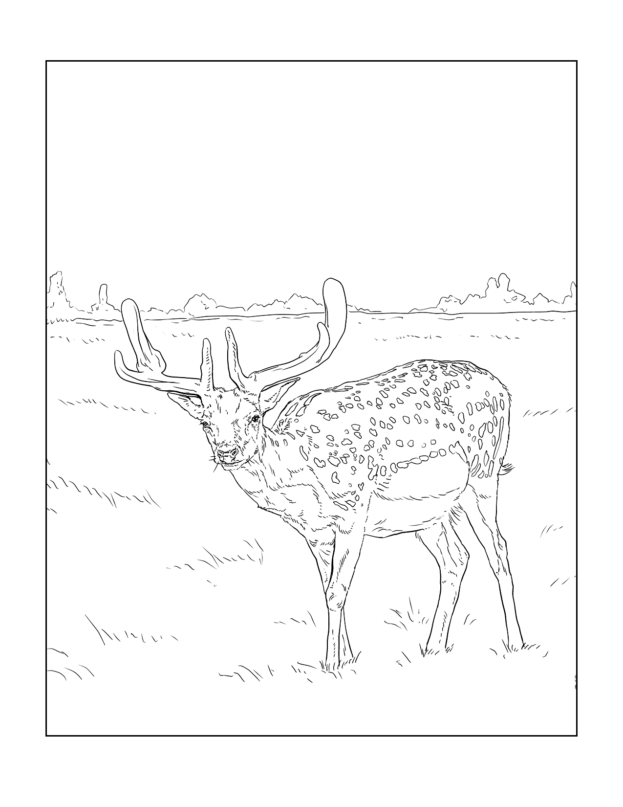 Deer In Nature Scene Coloring Page
