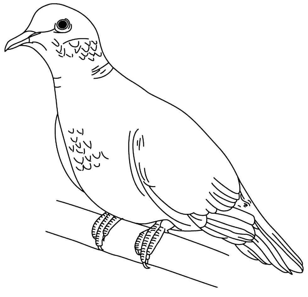 Dove Printable Coloring Pages