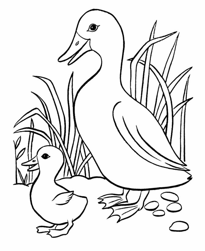 Duck and Duckling Coloring Pages