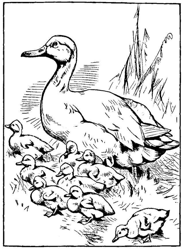 Duck Coloring Pages Coloring Rocks