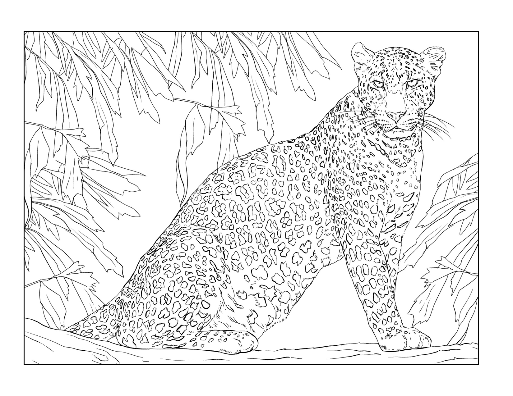 Fierce Jungle Leopard Coloring Page