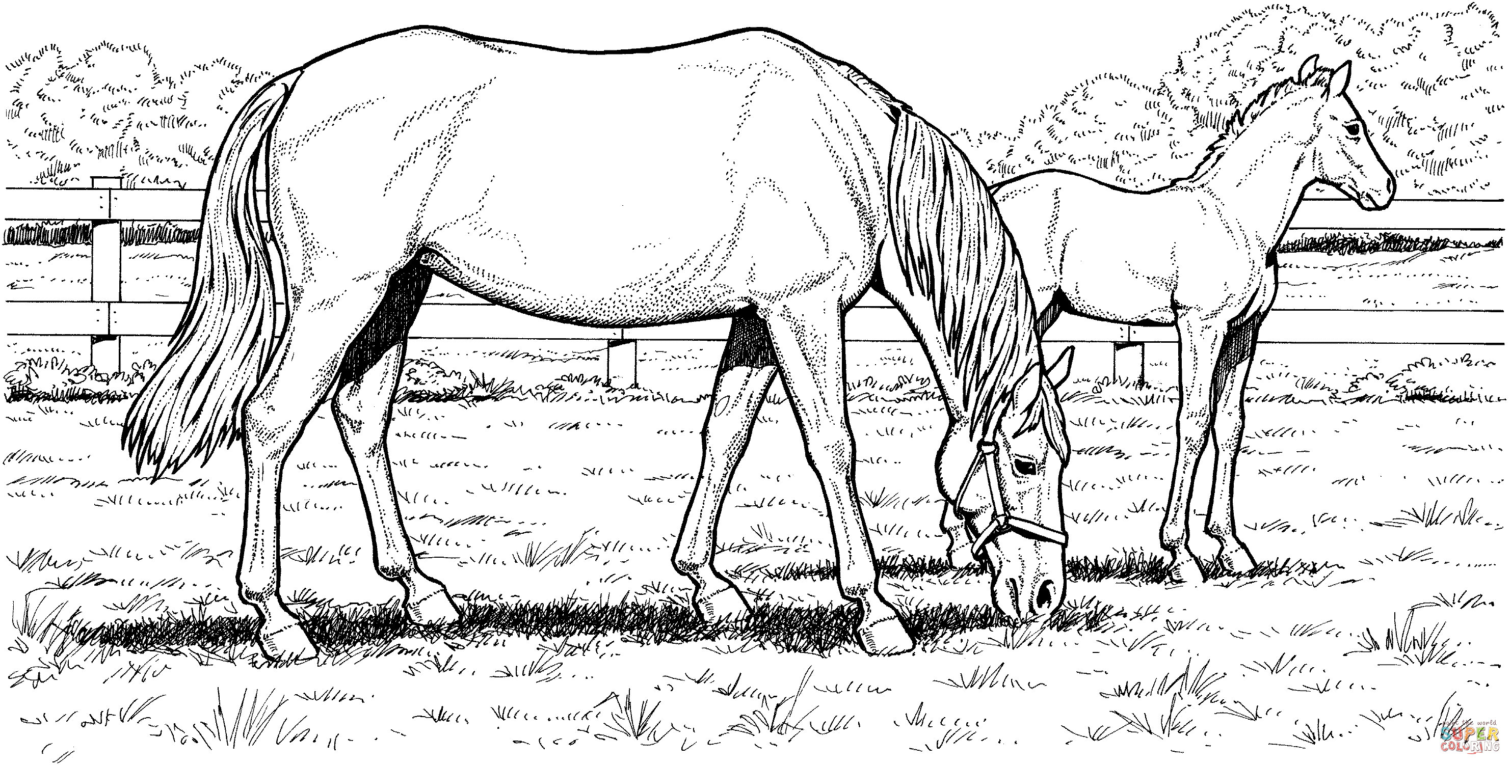 Horse Coloring Pages ⋆ coloring.rocks!