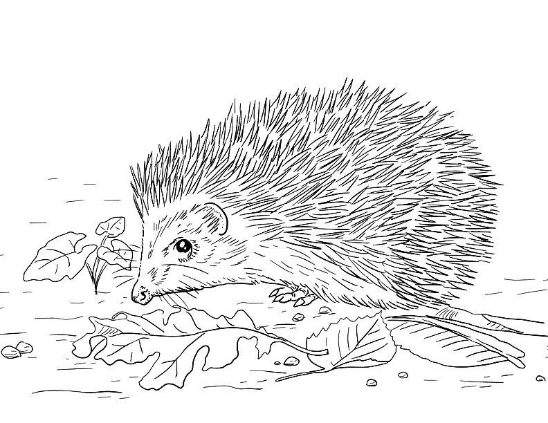 Hedgehog In The Leaves Coloring Page