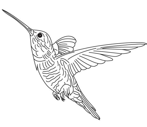 Hummingbird Coloring Page – coloring.rocks!