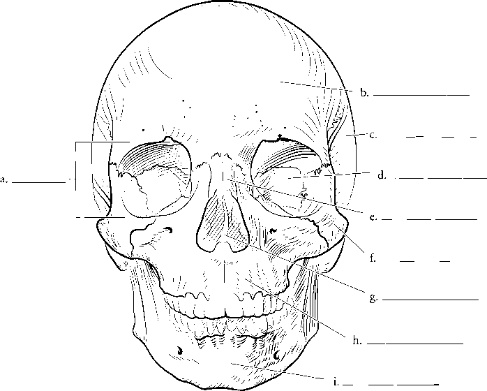 Label Skull Anatomy Printable Page