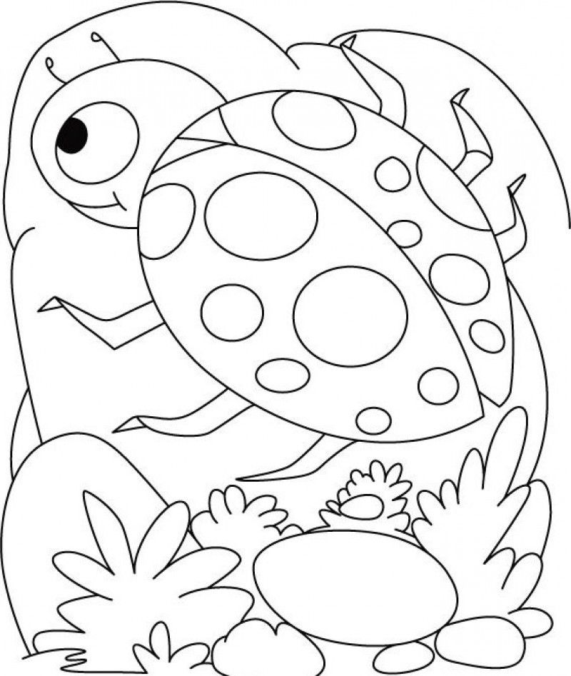 Ladybug Coloring Page for Kids