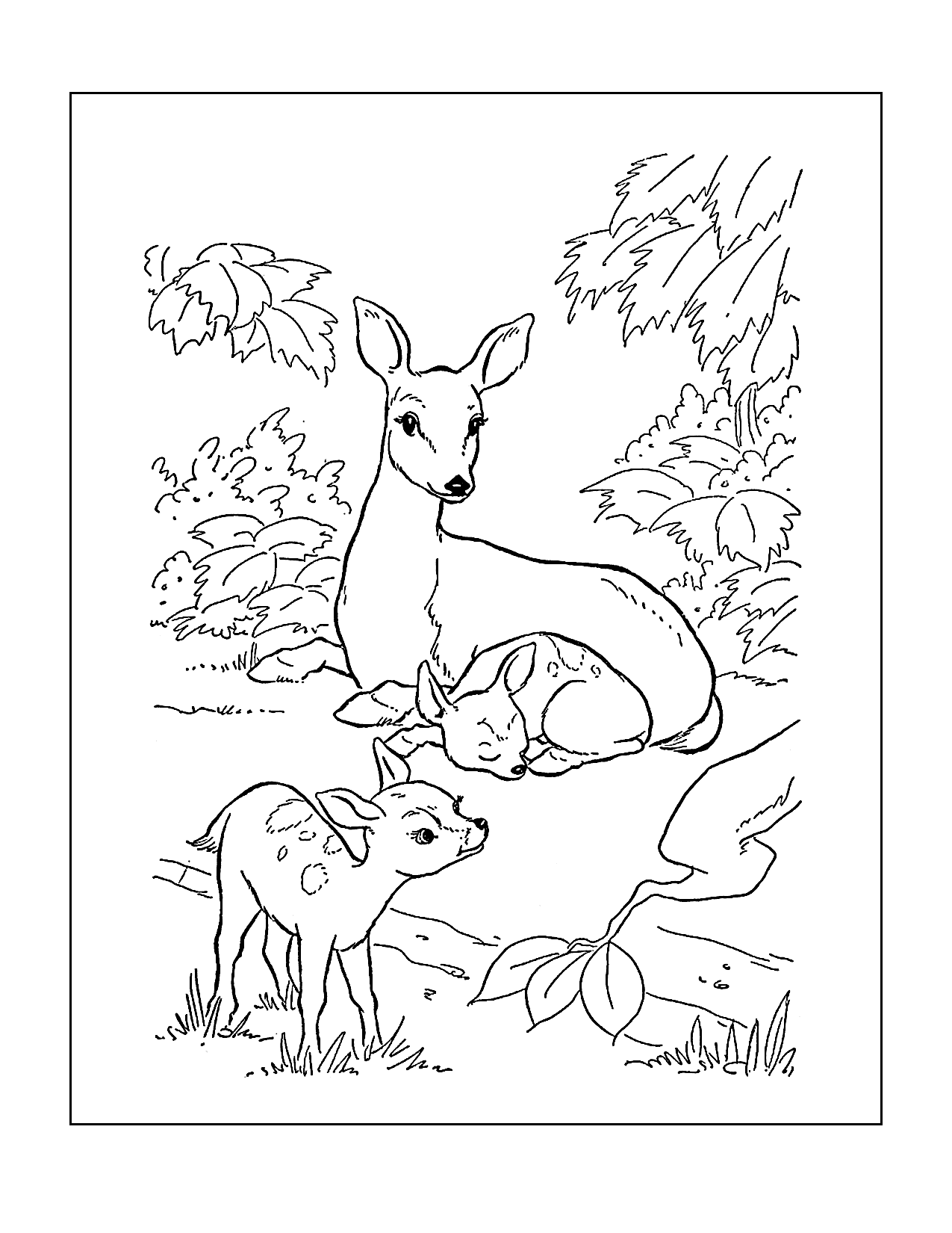 Mom And Baby Deer Coloring Page