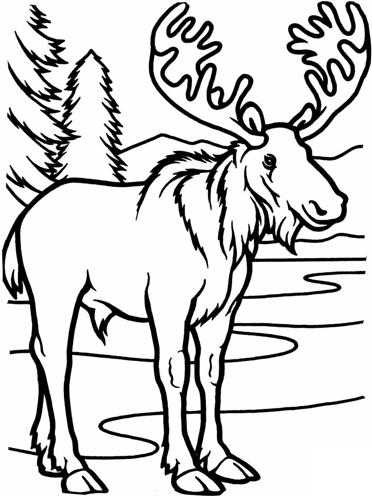 Free Printable Elk Coloring Pages - Coloring Home | 1024x768