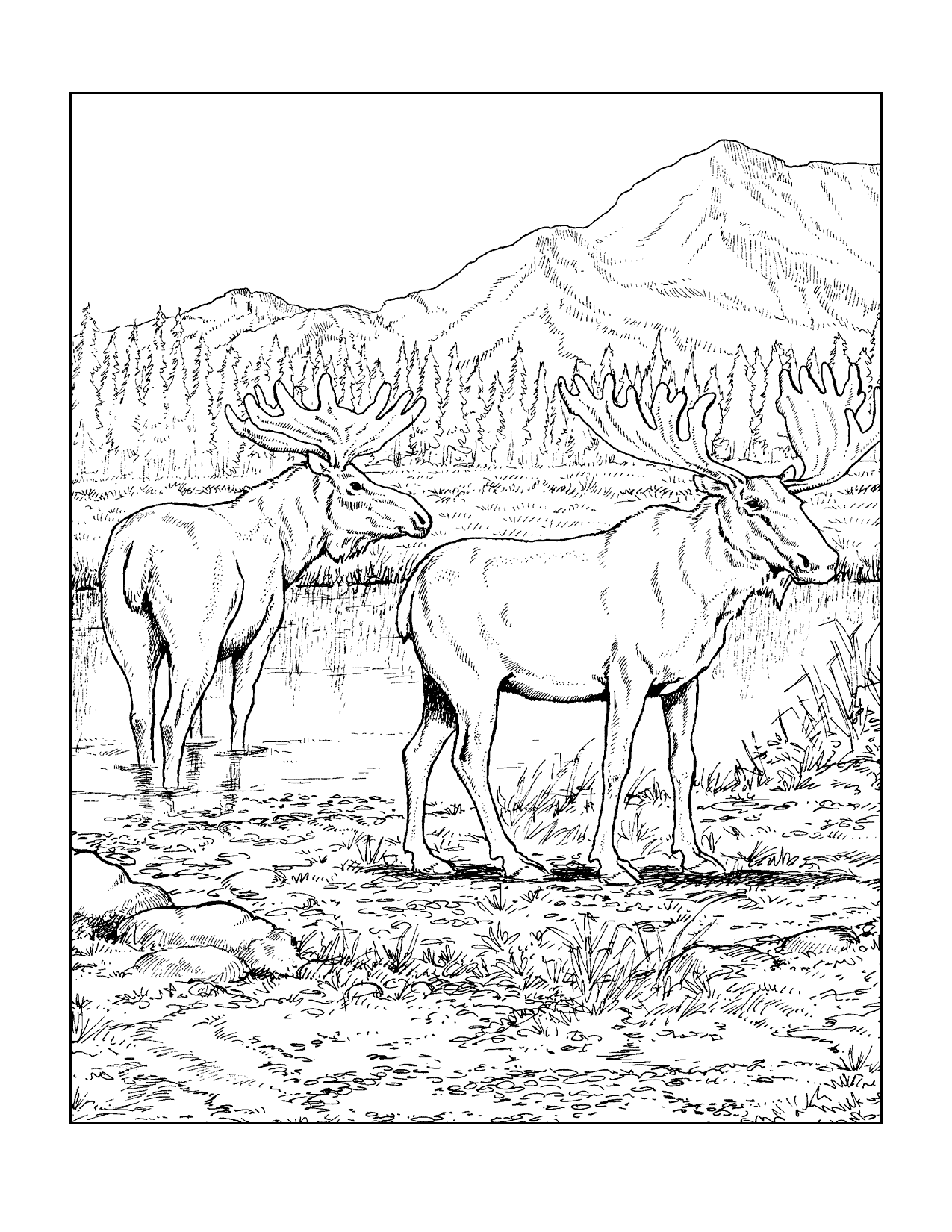 Moose In Nature Scene Coloring Page