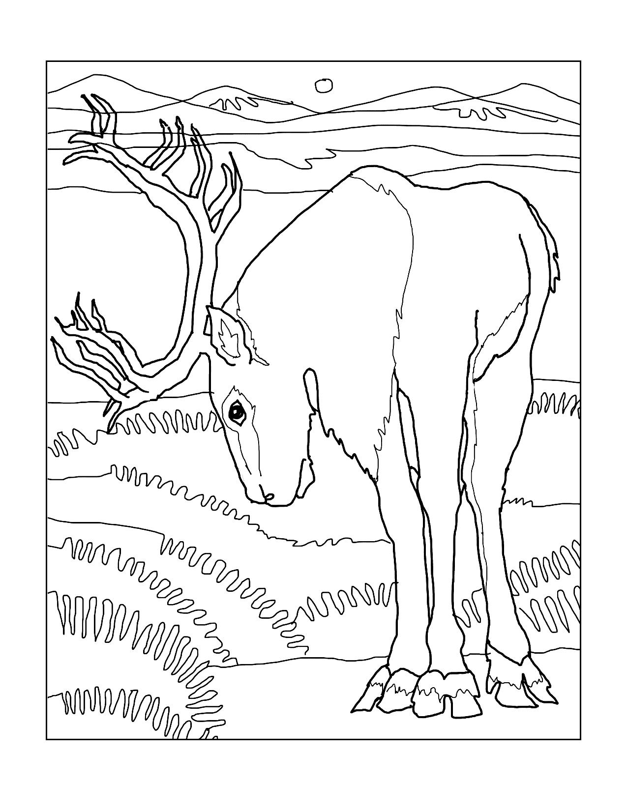 Northern Reindeer Coloring Page