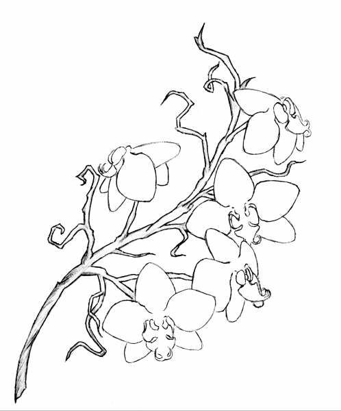 orchid flower coloring pages | Flower Coloring Pages – coloring.rocks!
