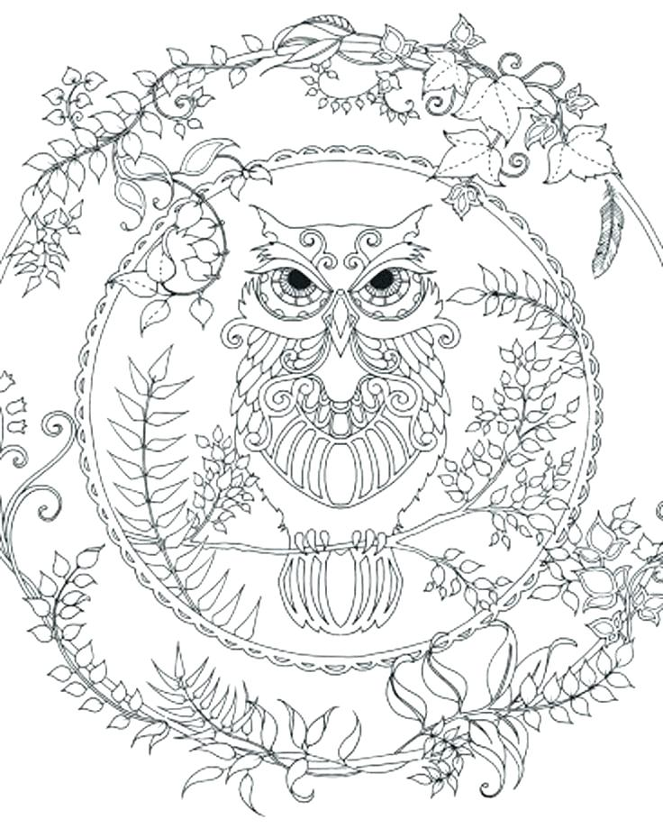 Owl Coloring Pages – Coloring.rocks!