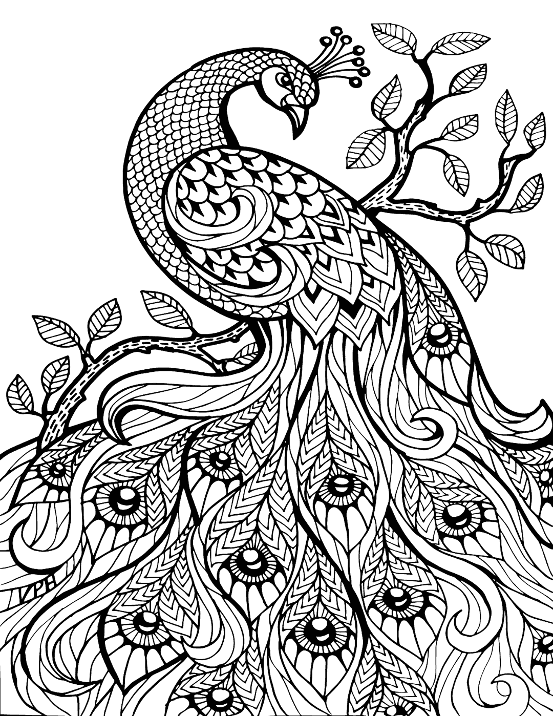 Peacock Coloring For Adults