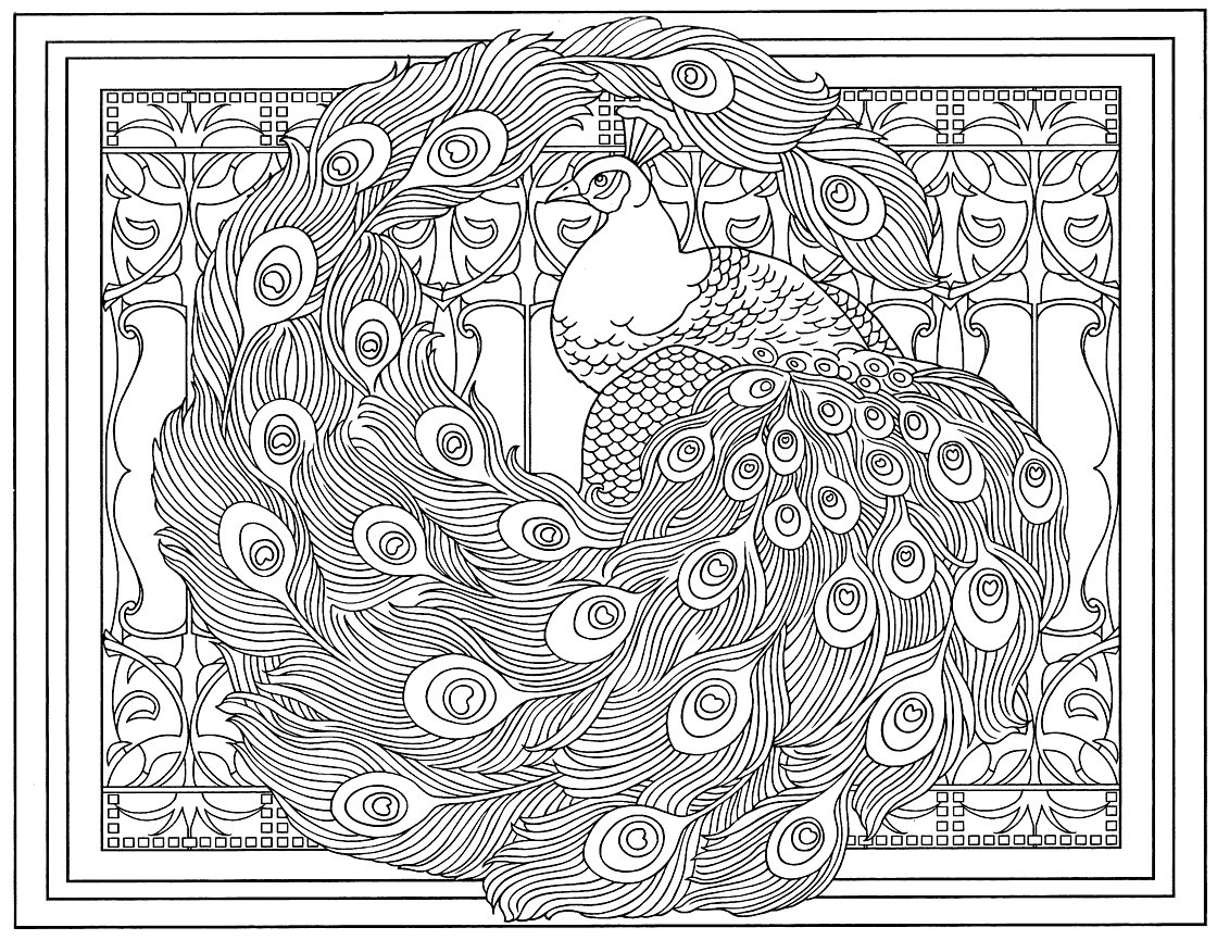 Peacock Printable Coloring Page for Adults