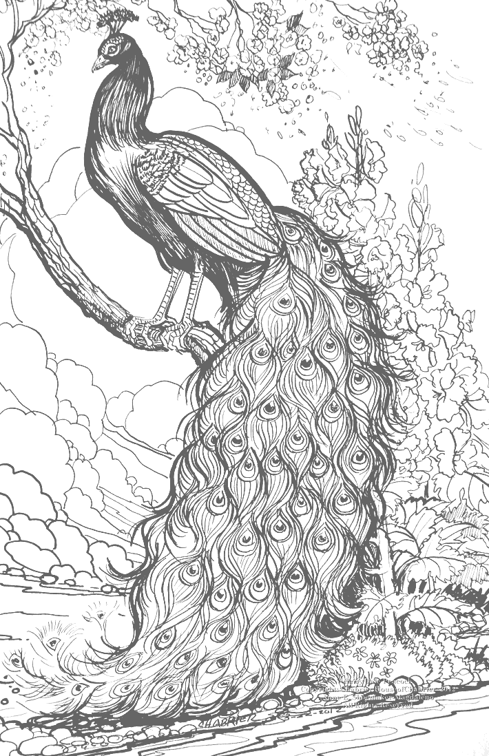 Peacock Drawing to Color