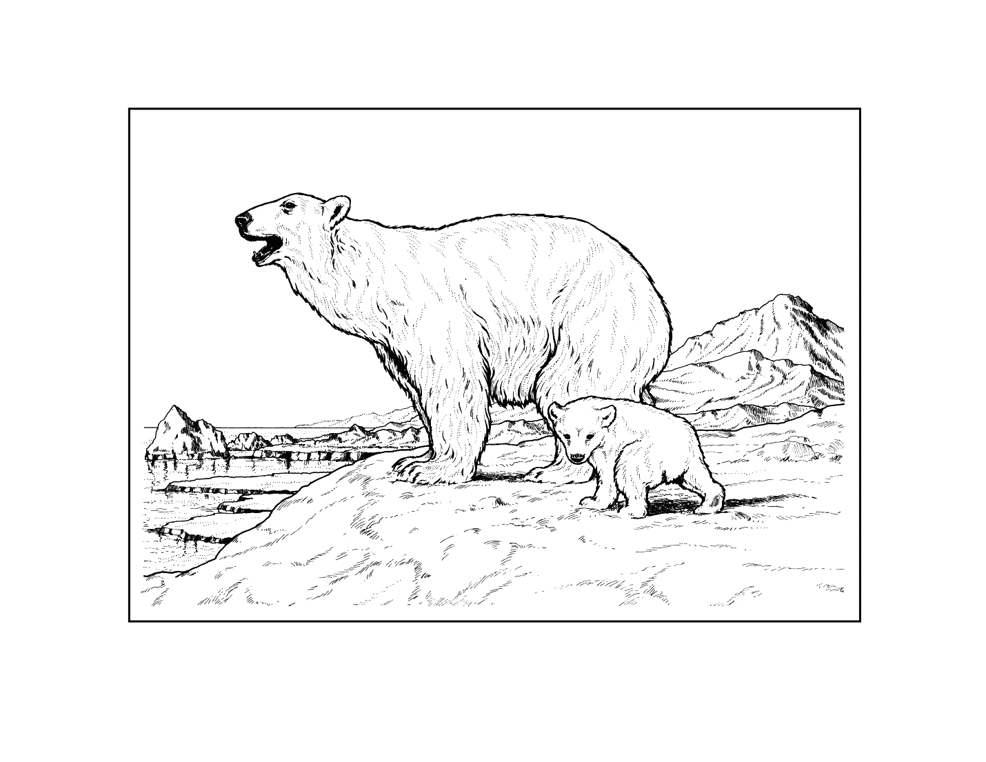 Polar Bear Realistic Coloring Page