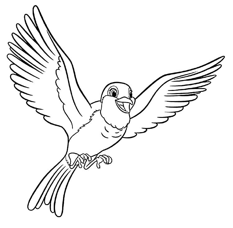 Pretty Cartoon Robin Coloring Page
