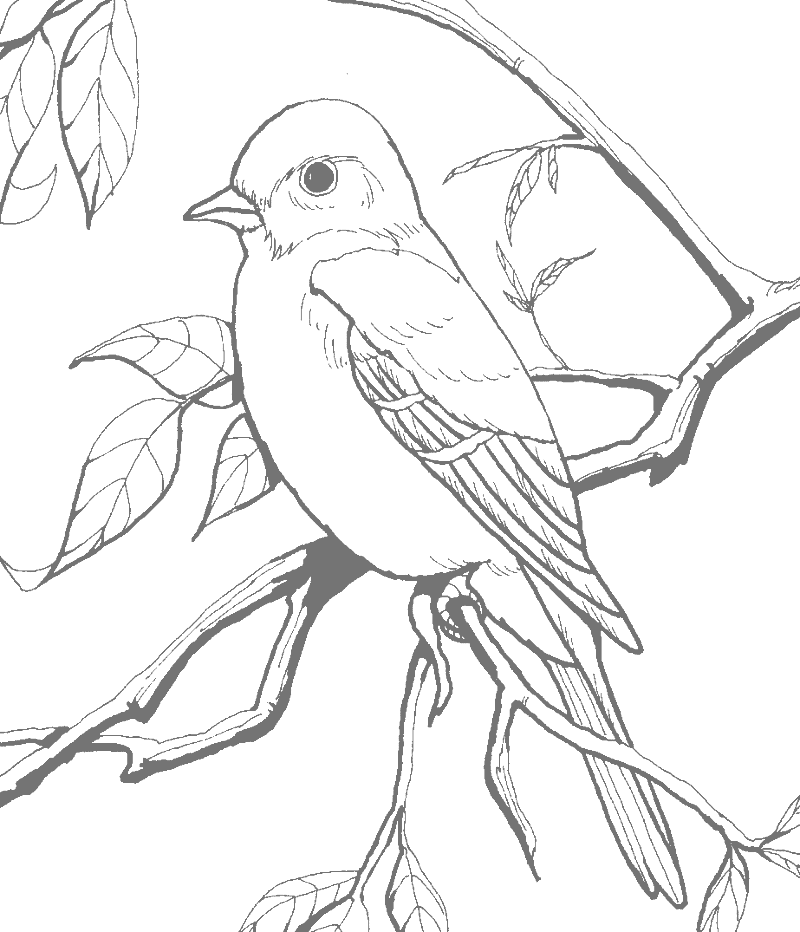 Pretty Robin In Tree Gray For Tracing Coloring Page