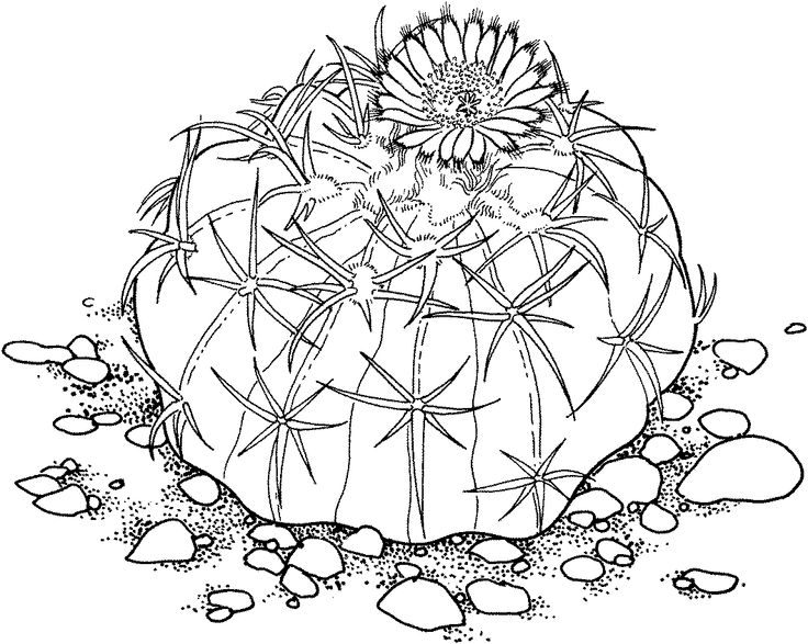 Prickly Cactus Coloring Pages