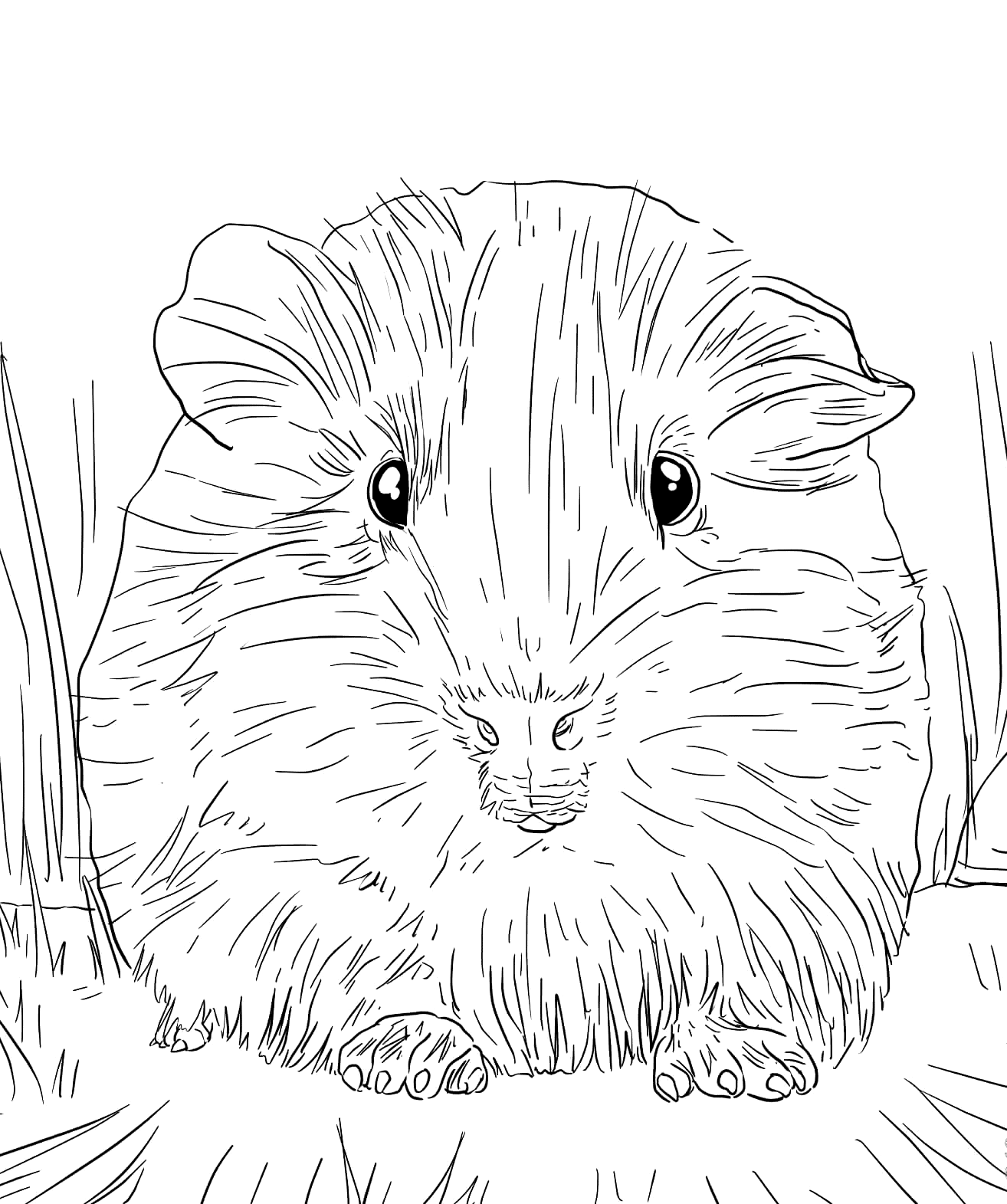 Printable Guinea Pig Coloring Pages Coloring Rocks