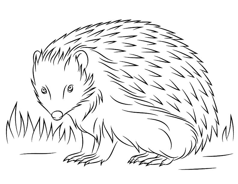 Printable Hedgehog Coloring Pages