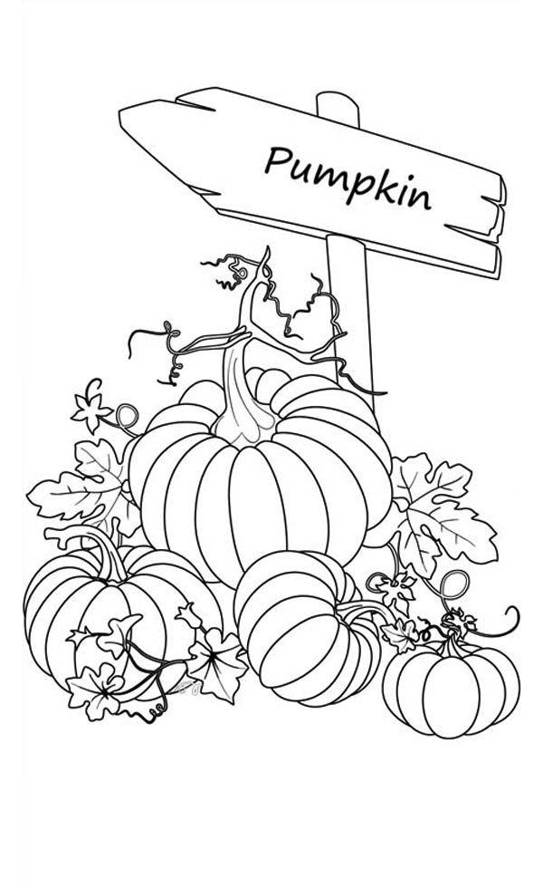 Pumpkin Coloring Pages Rocks