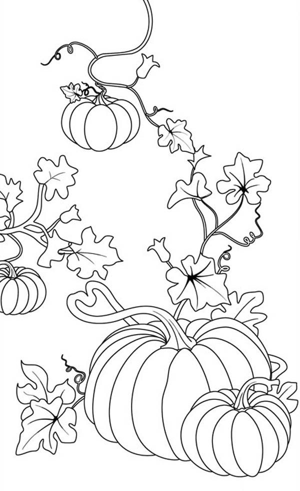 flower vine coloring page | 980x600