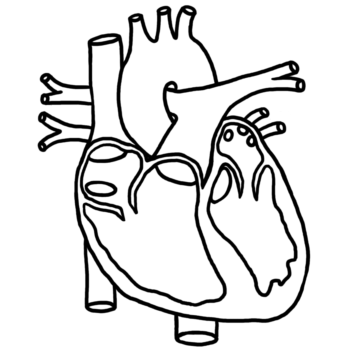 Real Human Heart Coloring Page