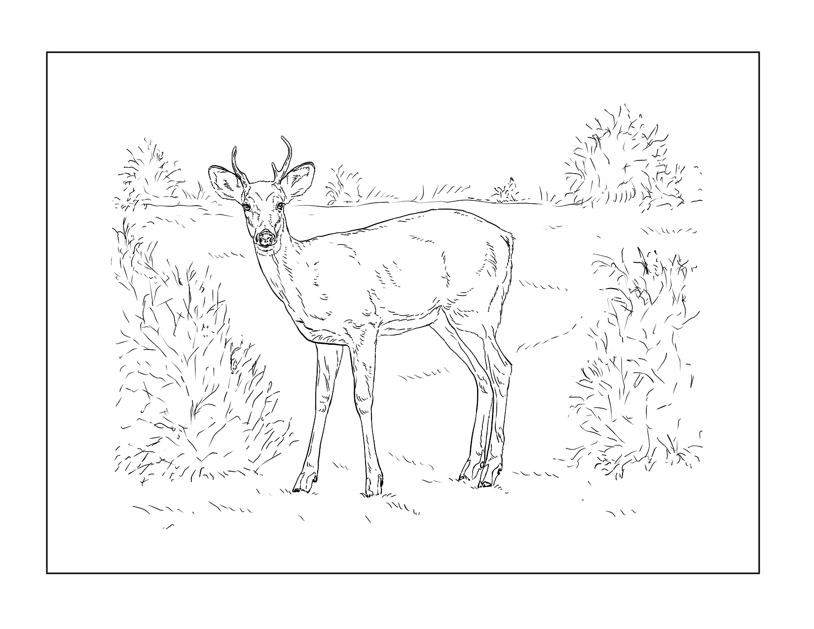 Realistic Deer Coloring Page