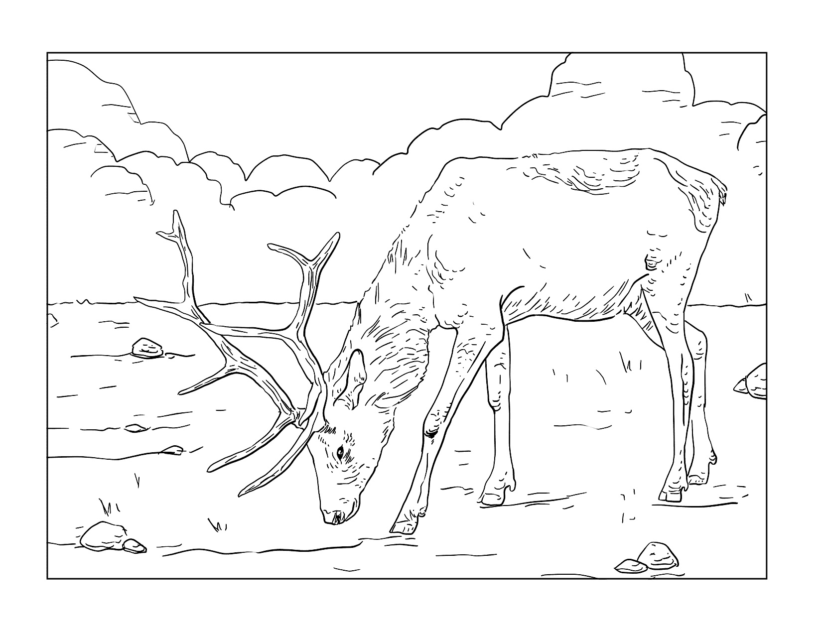 Realistic Elk Coloring Page