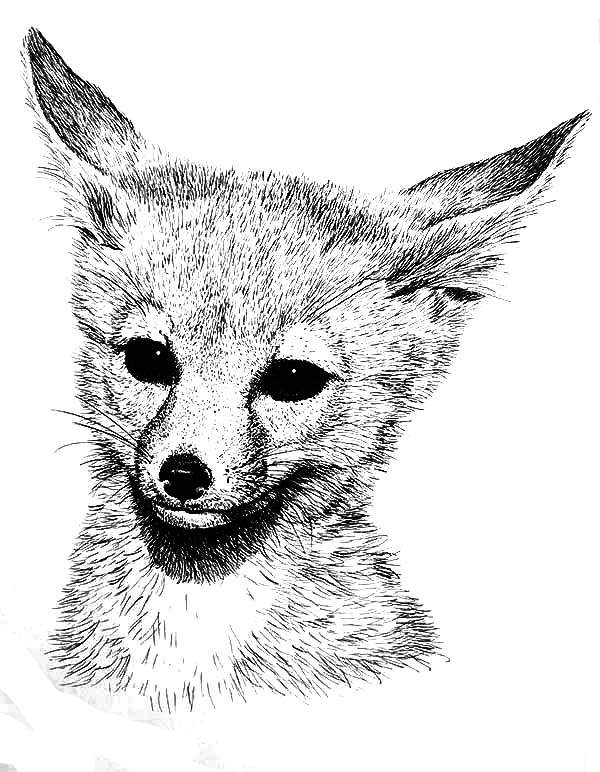 Fox Coloring Pages - Life is Sweeter By Design | 772x600