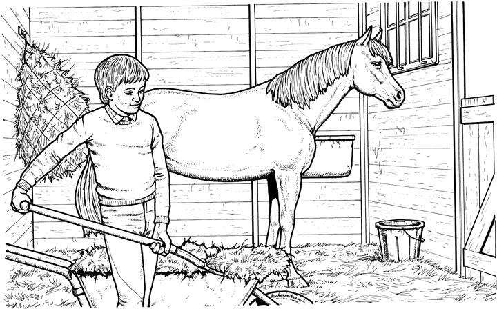 Realistic Horse Coloring Page