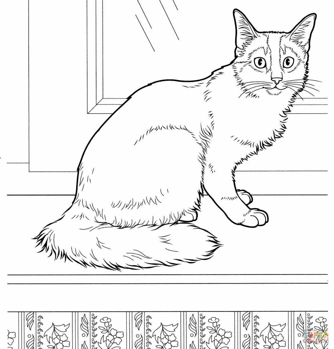 Realistic House Cat Coloring Page