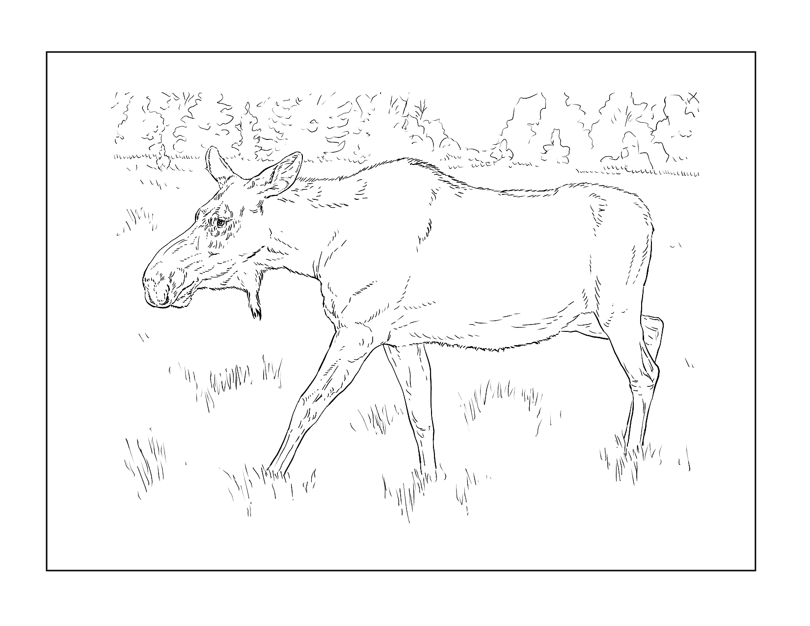 Realistic Moose Coloring Page