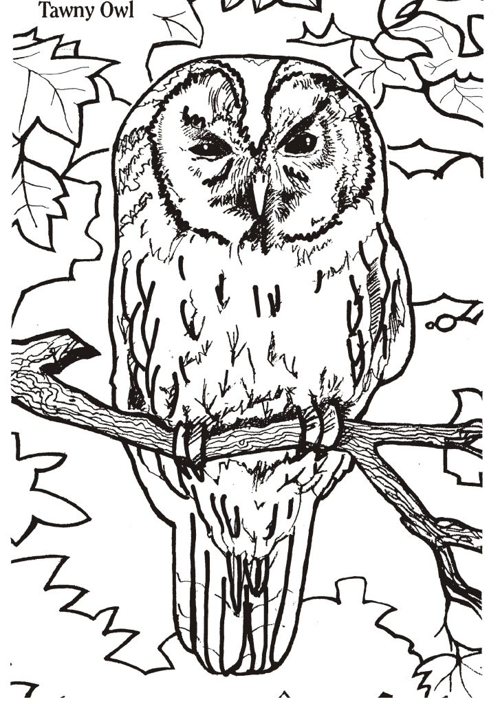 Realistic Owl Coloring Page