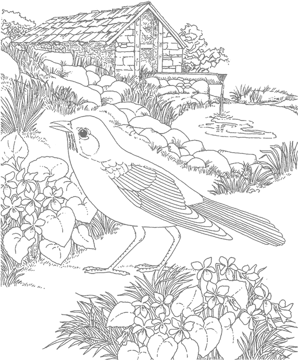 Robin Bird Gray For Tracing Coloring Page