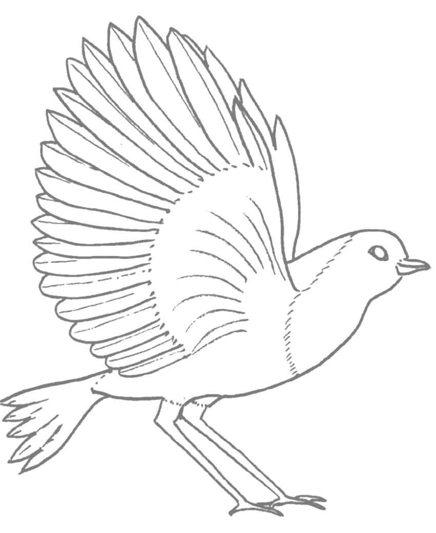 Robin Bird With Open Wings Tracing Coloring Page